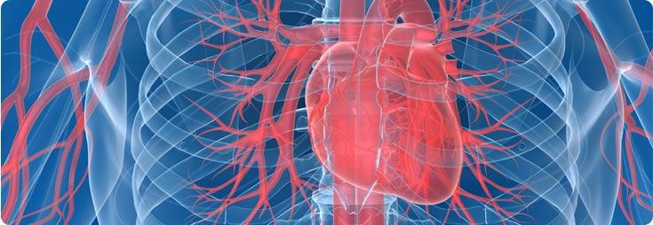 Herzgesundheit, Kreislauf, Blutdruck & Blutgefäße